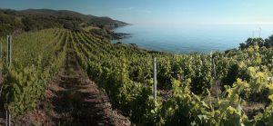 Vandenberg Wines Vineyard